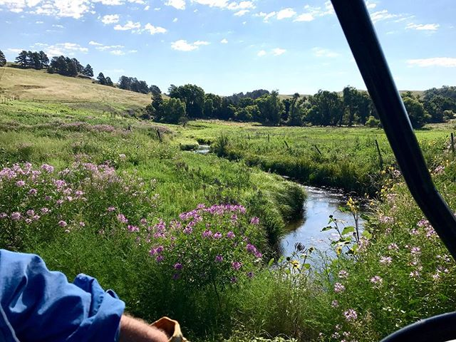 Mel's view from the gator: this Rushville summer was one for the books 📚 normally everything is already brown by this time of year • #sandhills #SandhillsInstitute #Rushville #Nebraska #nebraskasummer #green #beautiful #summer