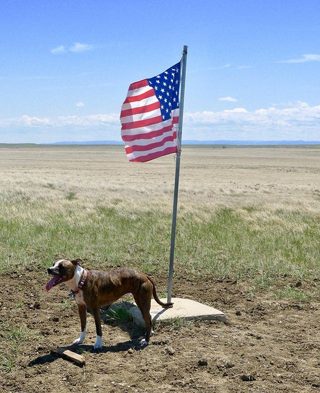 Here, Sister, an American pit bull, plays fetch at the geographic center of the United States in South Dakota with artist Mel Ziegler.  She was a great friend and member of the Ziegler family. We love you Sister.