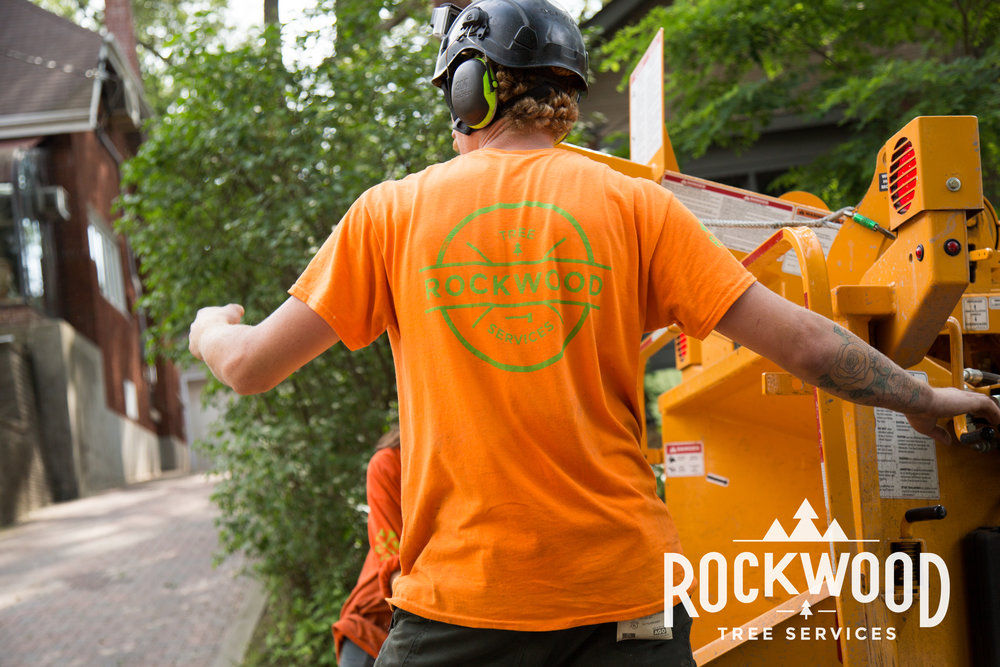 Rockwood Tree Services - Created ground-up web space with fresh imaging and promotional 4K videos. Introduced Google SEO in place of existing redundant advertising, coupled with custom web domain.www.rockwoodtree.services
