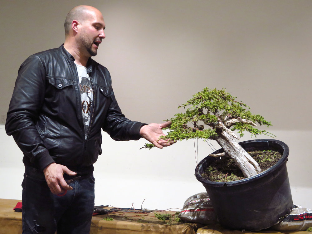 This is Mauro's Shimpaku Juniper back in March 2017. He will continue to develop the tree at our next meeting. Please Join!