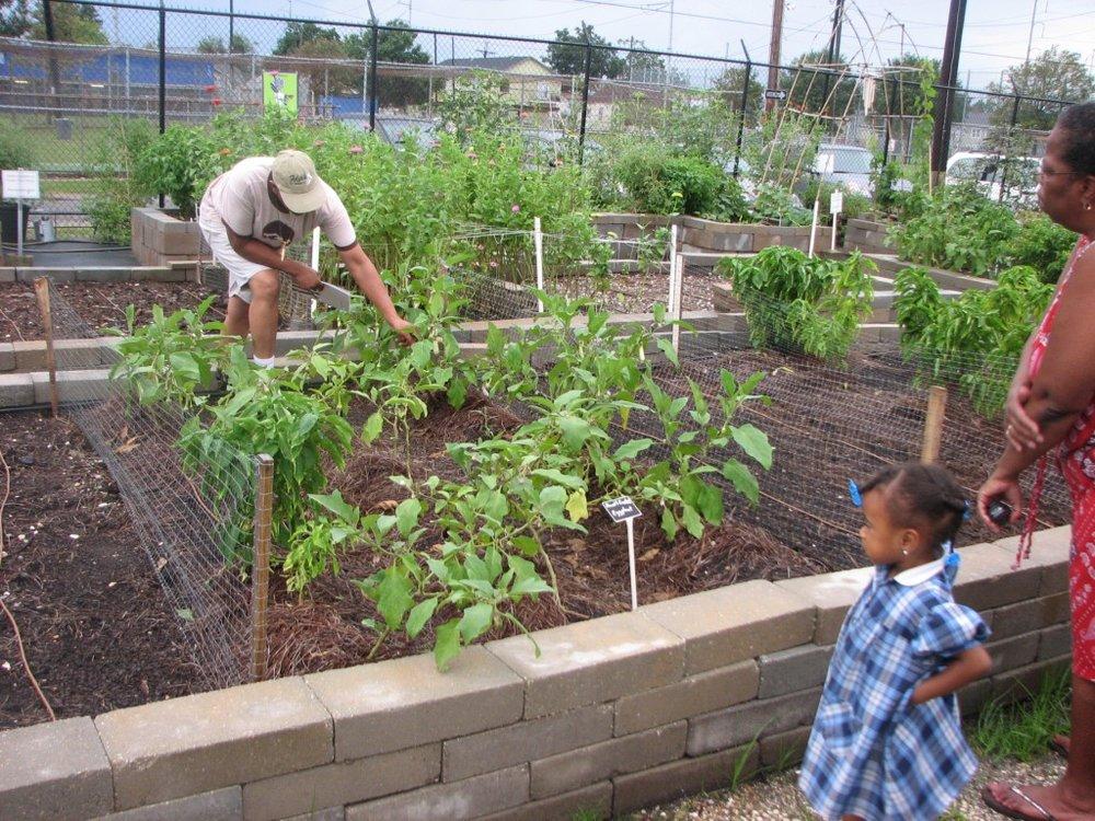 Garden-Build-Bio-Pics-0341-1024x768.jpg
