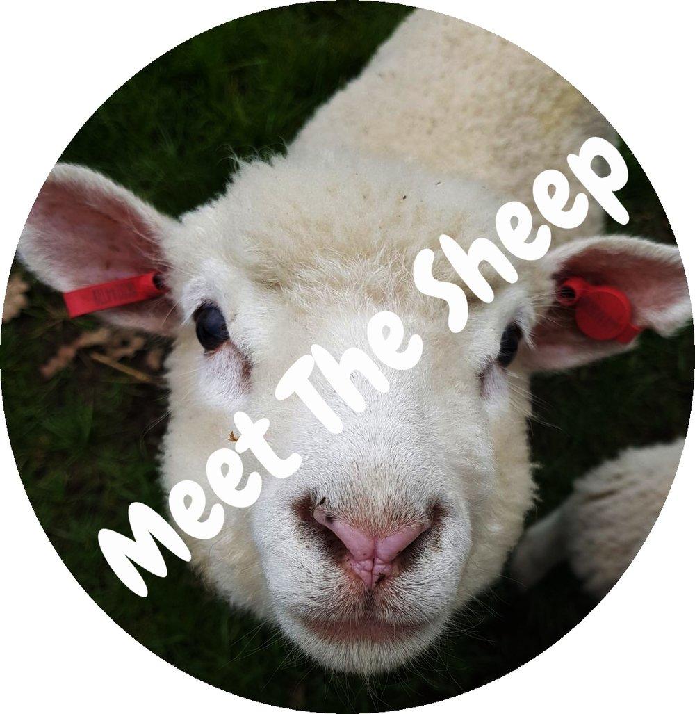 Lamb Face.jpg