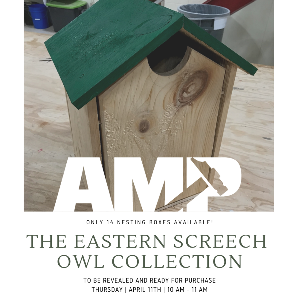 Eastern Screech Owl - Untangled Minds Foundation.png