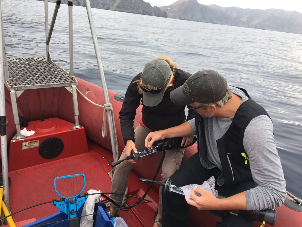 Listening to the Ocean - Researchers can record the sounds that marine mammals make by deploying stationary underwater microphones while at sea. These hydrophones will record things like the songs of humpback whales and the whistles of dolphins.