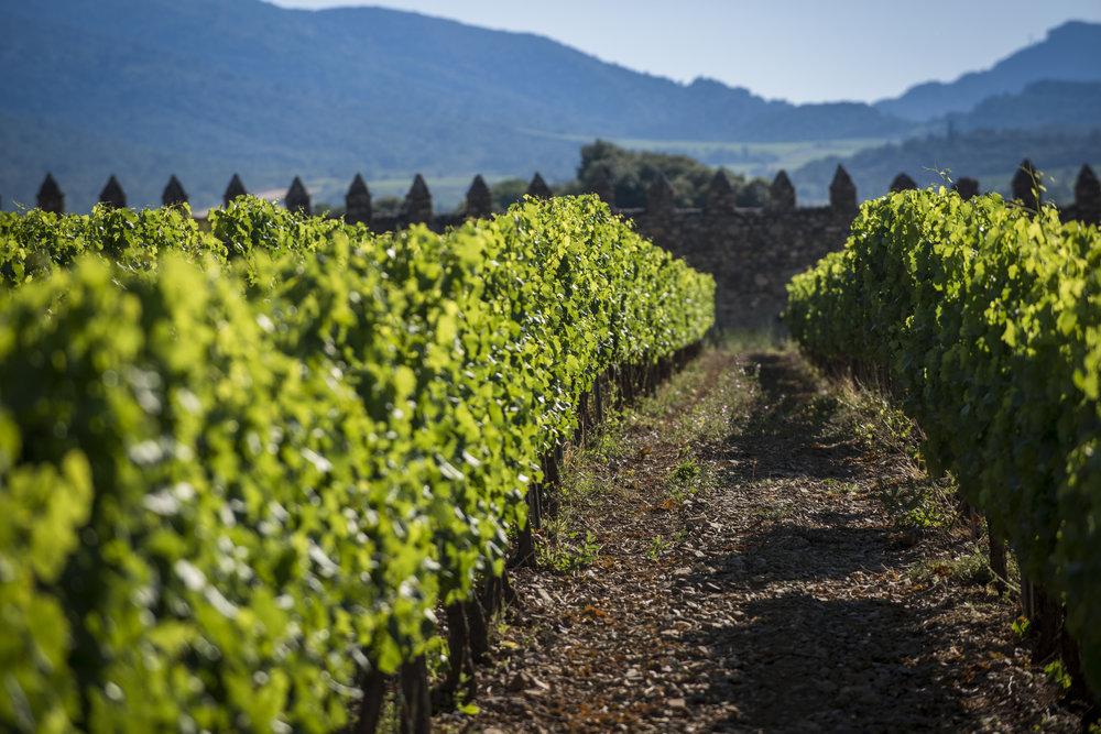 Vignoble Grans Muralles.jpg