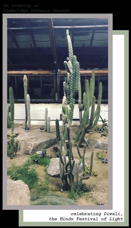 Cacti_Cambridge_Botanic_Garden.png