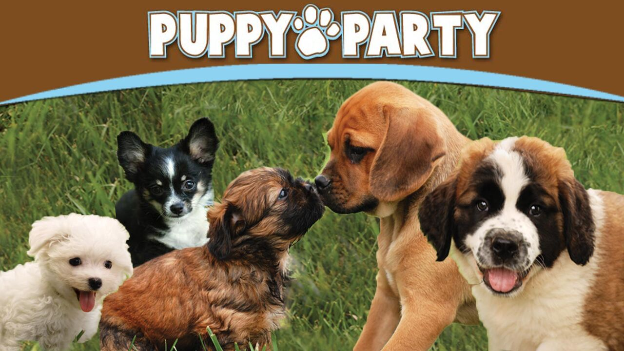 Puppy Party -