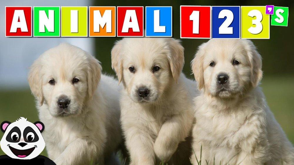 Animal 123's -