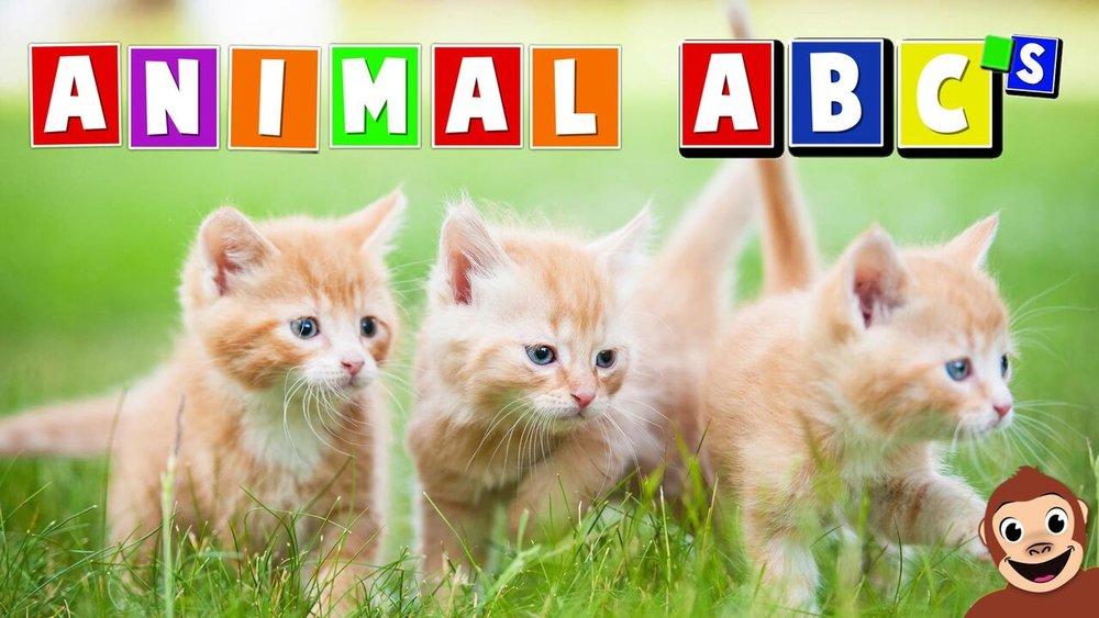 Animal ABC's  -