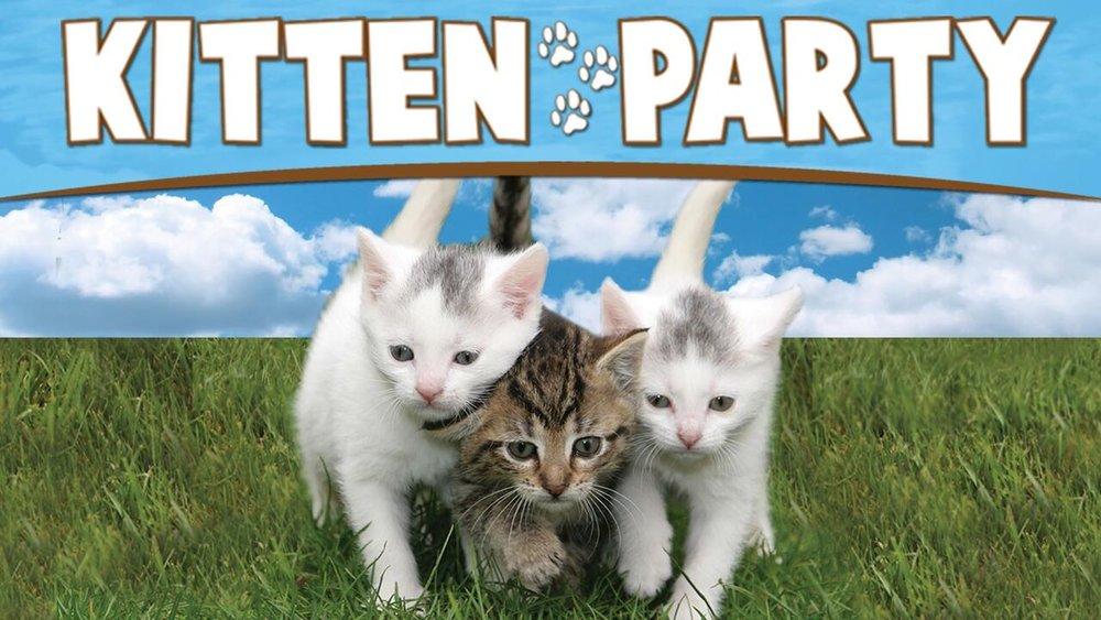 Kitten Party -