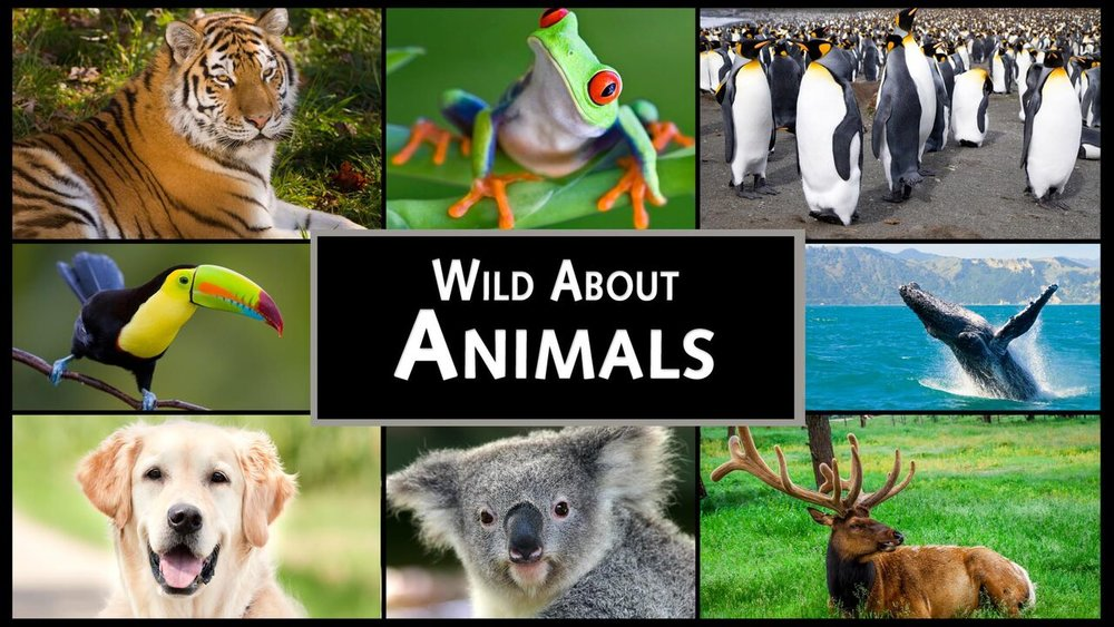 Wild About Animals -