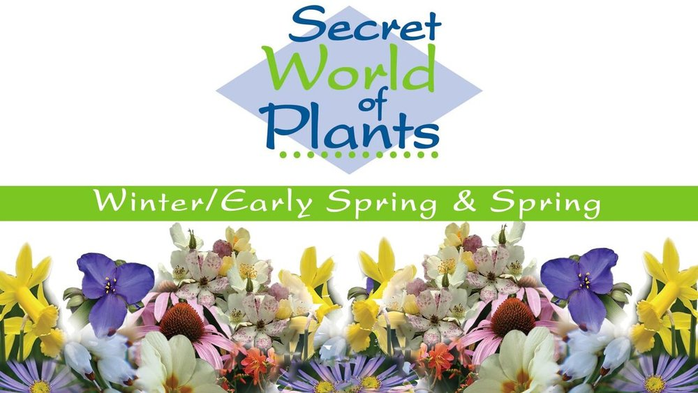 Secret World of Plants -