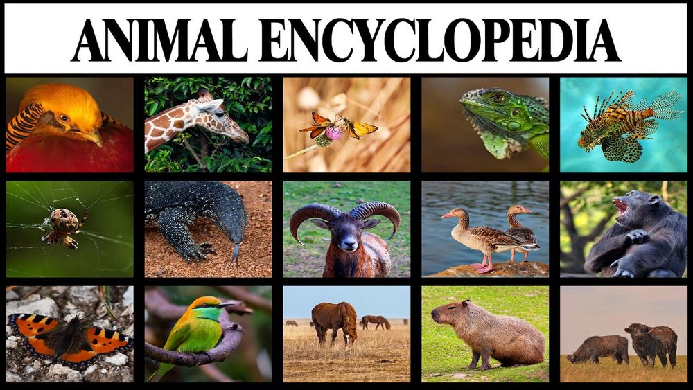 Animal Encyclopedia -