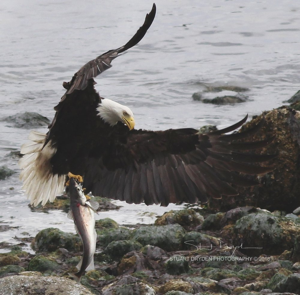 eagle-fish-21-05-16_052-tight2.jpg