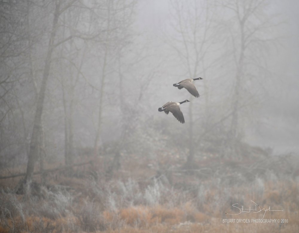 FOGGY-AM,-nov22,2016-0064.jpg