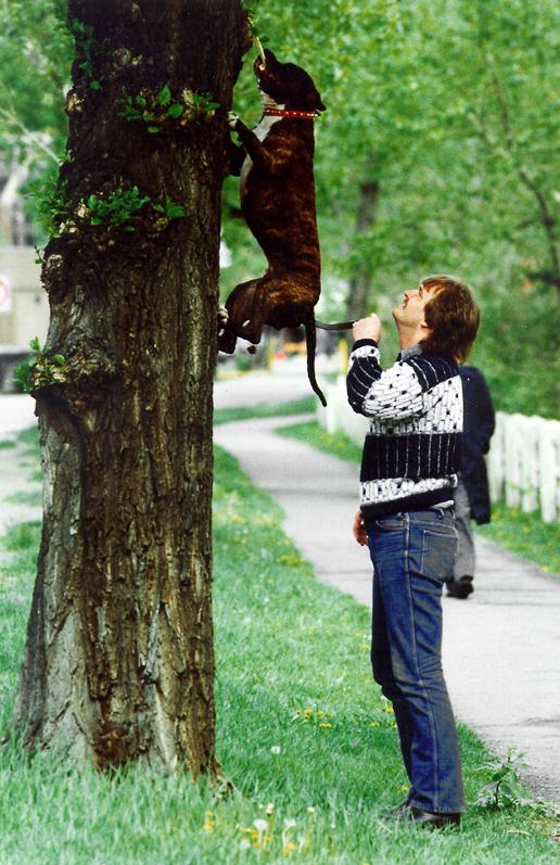 2 tree-climbing (cp win).jpg