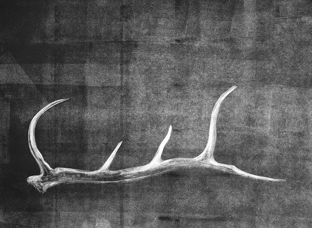 ShedAntlerStudy3_det_22x30.jpeg