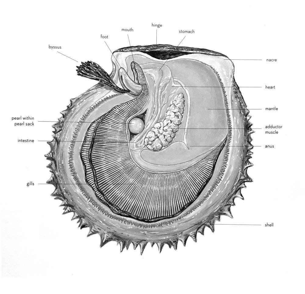 AnatomyOfAPearl.jpg