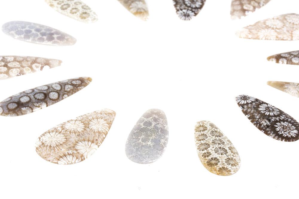 fossilcoral.jpg