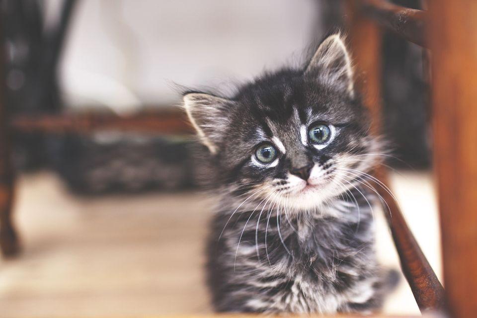 Kitten Tips