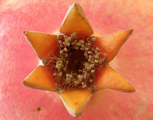 crown of pomogranit.jpg