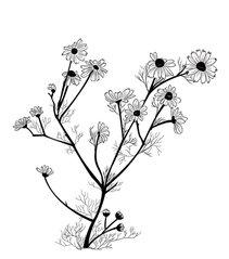bodysoulsynergetics.com chamomile.jpg