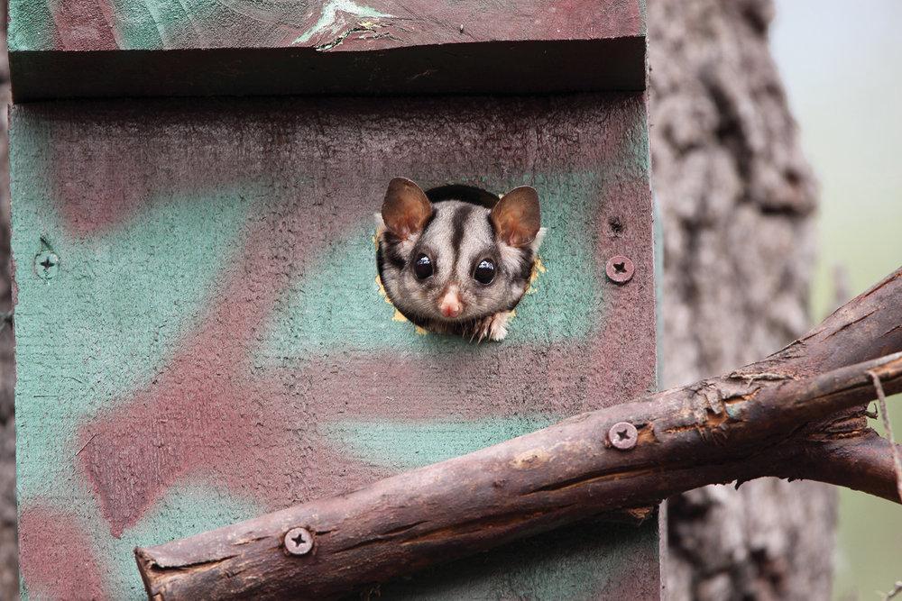Russell Jones_Sugar Glider Nest box LoRes.jpg
