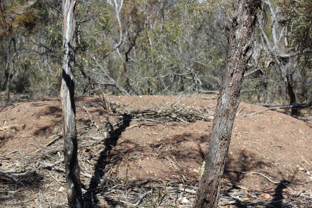 Mallee Fowl Mound.jpg