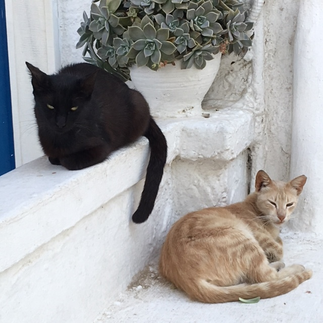 Cats lounging in Mykonos