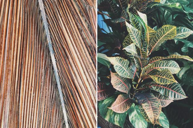 Tropical Inspiration | Sycamore