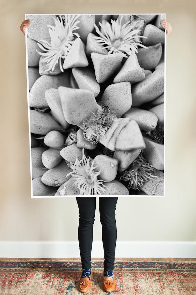 Cactus Printable Posters | Sycamore
