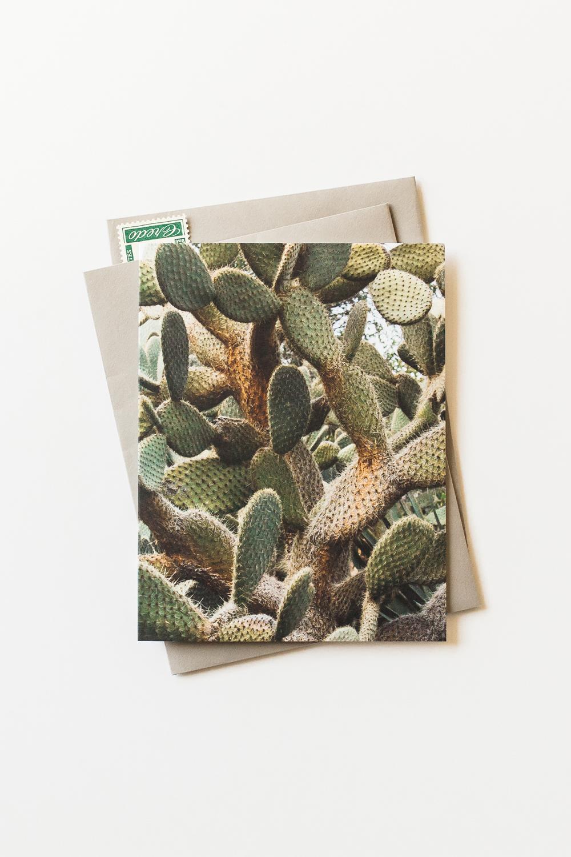 fc177-cactus-4-stamps.jpg