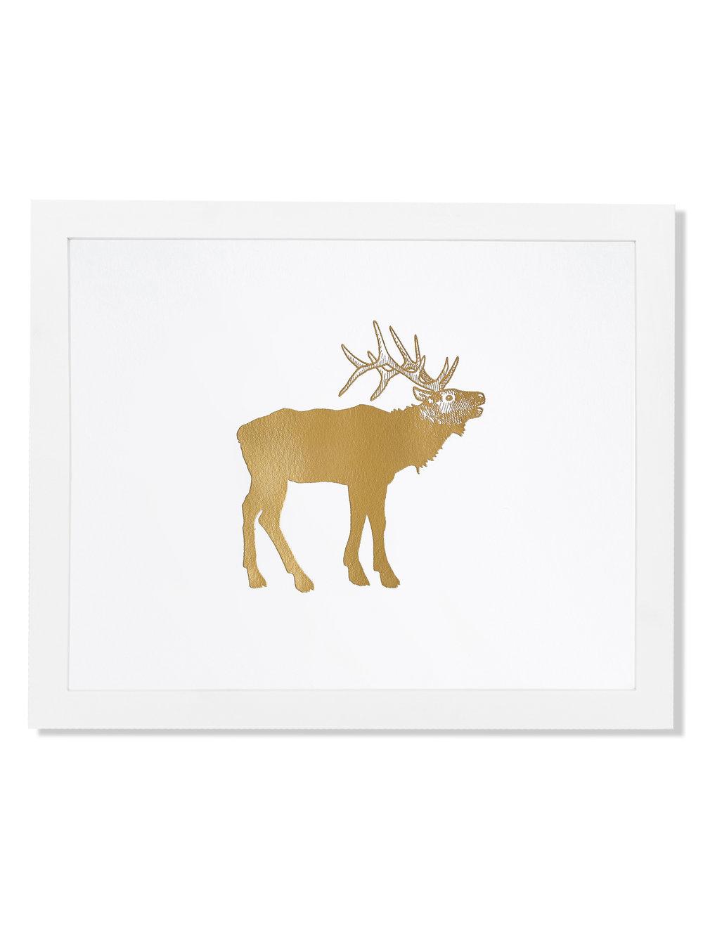 fp014-animal-elk.jpg