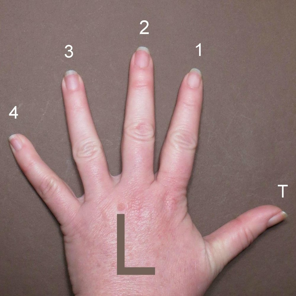 Fingers-Left_Hand.jpg
