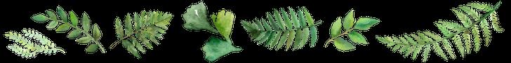 fern banner.png