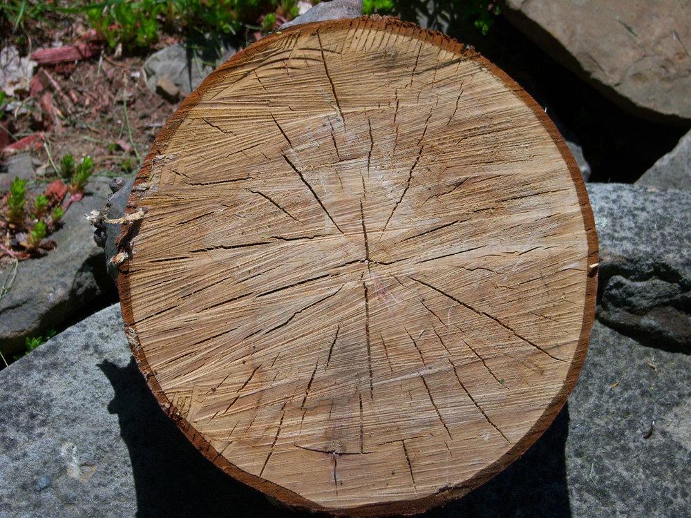 wood-877368_960_720.jpg