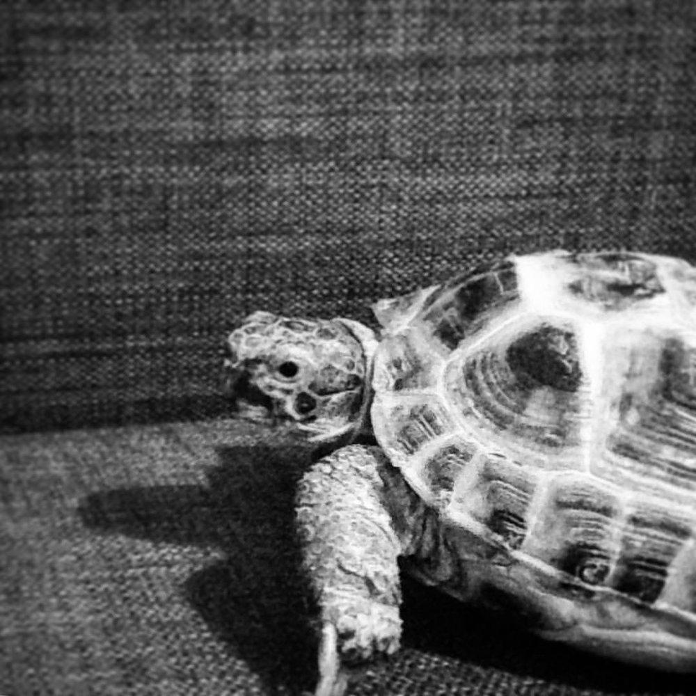 He so zen. #theadventuresofshelldonkoopa #tortoise #🐢