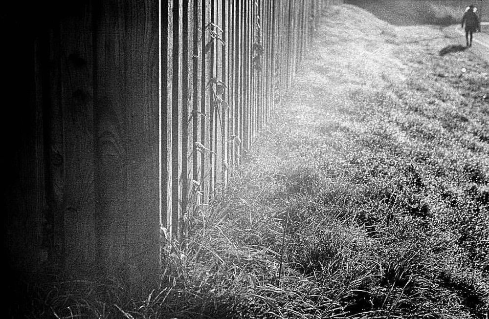 Morning sun. Filtered through mist. Onto Frost. This is my kind of winter. Shot to #film on my 1938 #LeicaIIIa