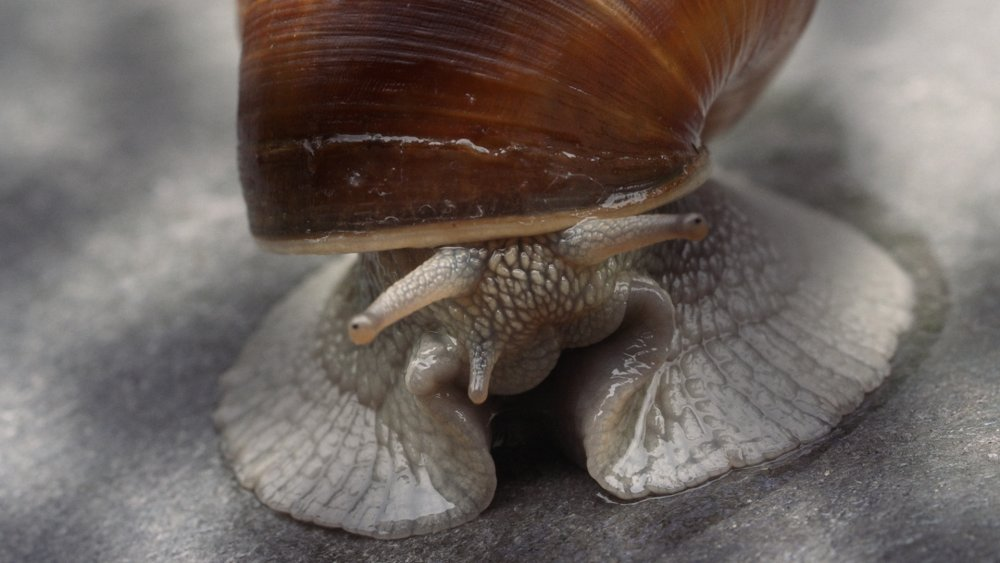 becoming-animal-2018-001-snail-closeup.jpg