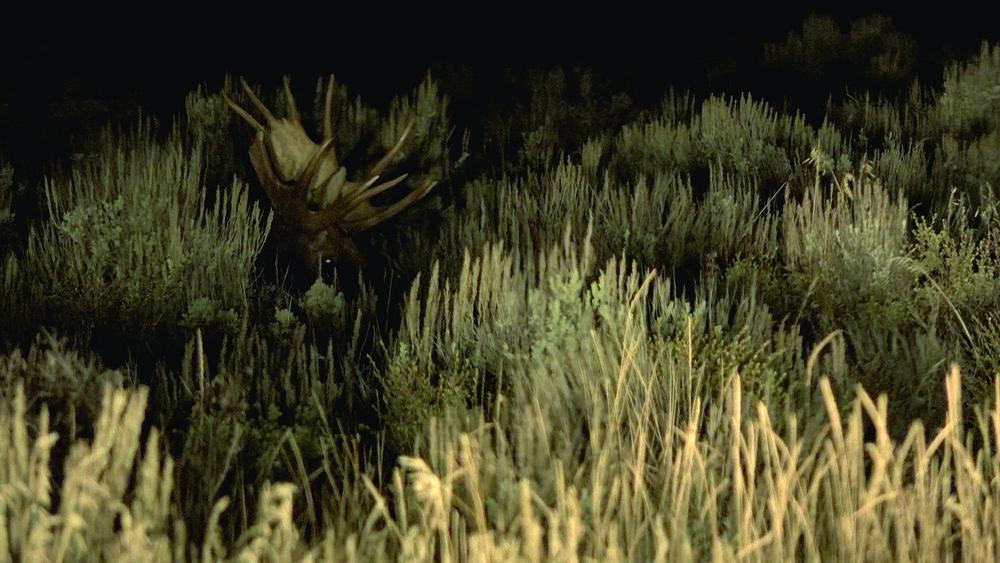 BA_Moose in the night.jpg