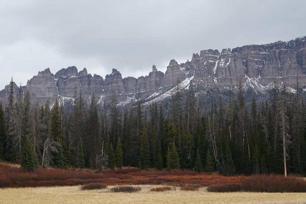 BA_Mountain Forest Grass.JPG