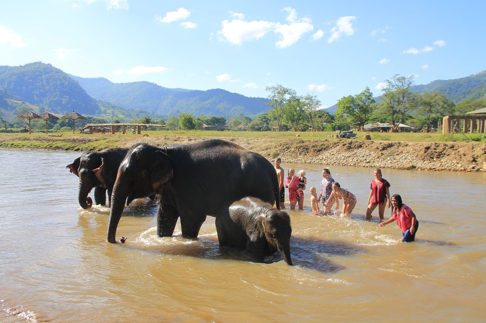 Happy Elephant Home tripadvisor.jpg