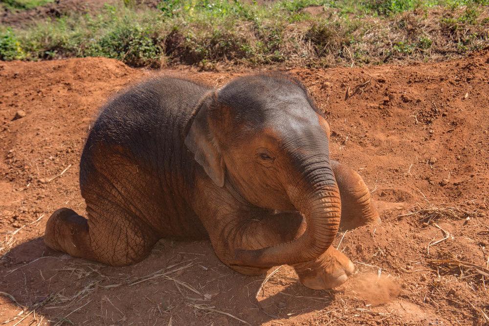 Happy Elephant Home2.jpg