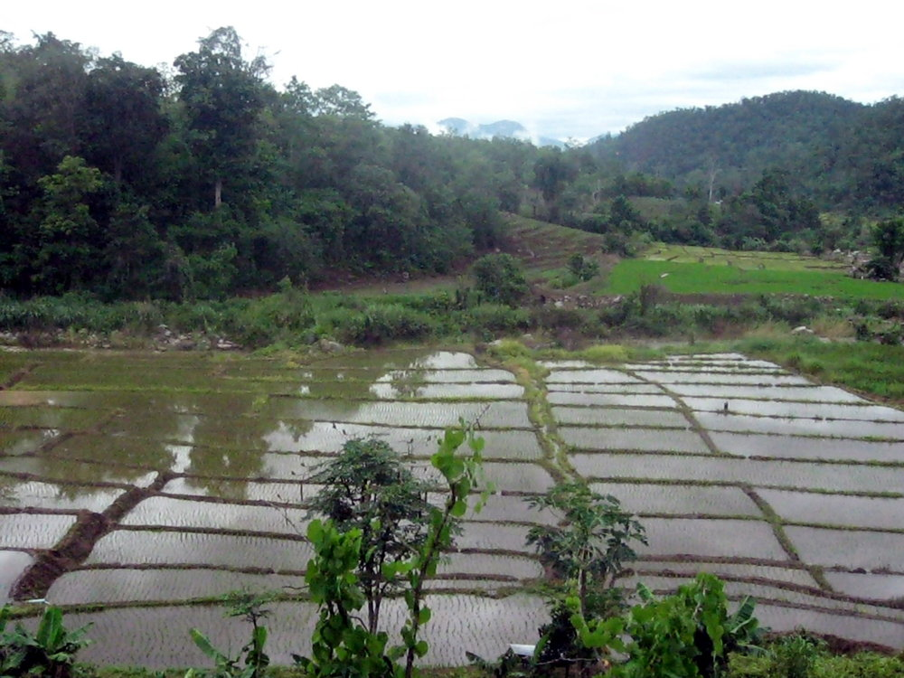 Rice paddies on the way to Pai.jpg