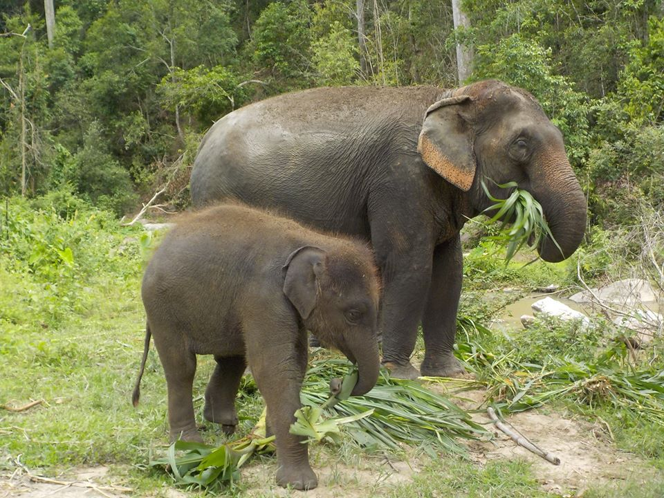 Mother and baby elephant enjoying their food at Into the Wild Elephant Camp.jpg