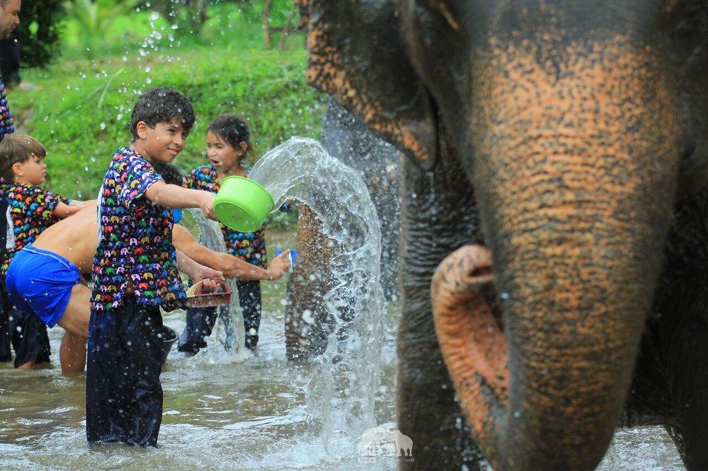 Kanta.Elephant (1).jpeg