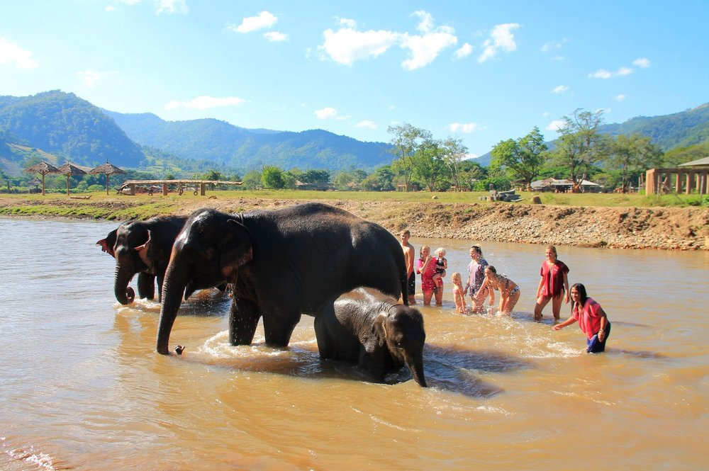 Happy Elephant Home tripadvisor resize.jpg