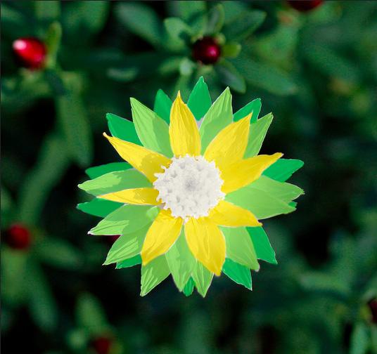 bp-flower-power-1.jpg