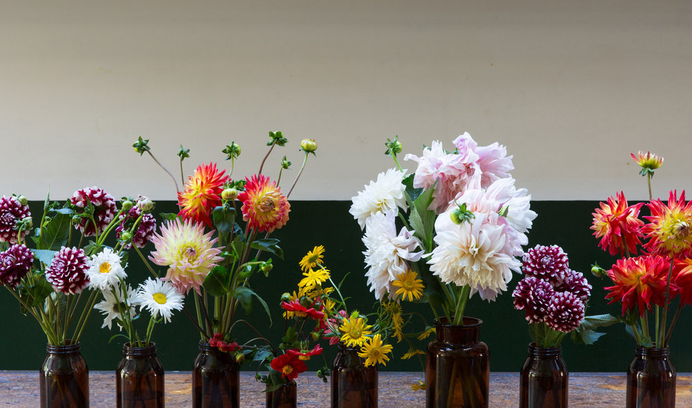 DAHLIAS/celebration
