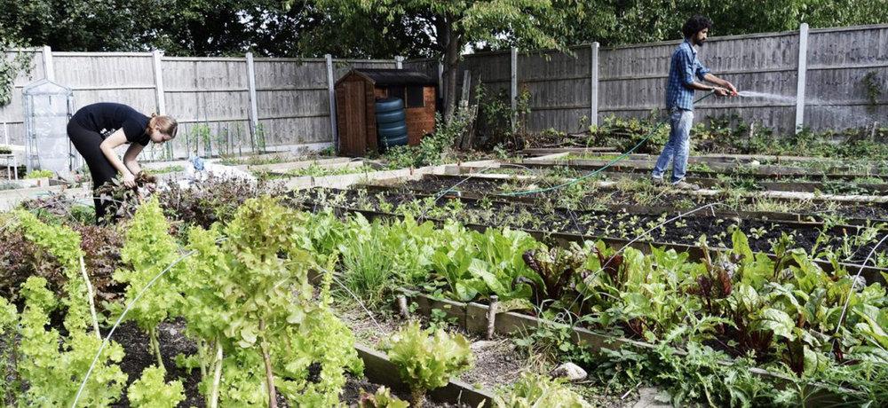 walthamstow-grow1500.jpg